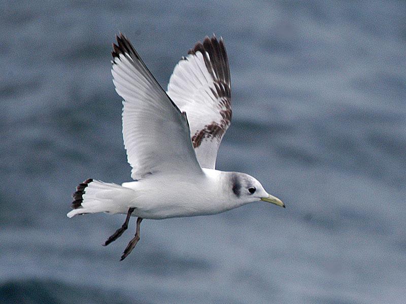 Journal 167 - PELAGIC BIRDS